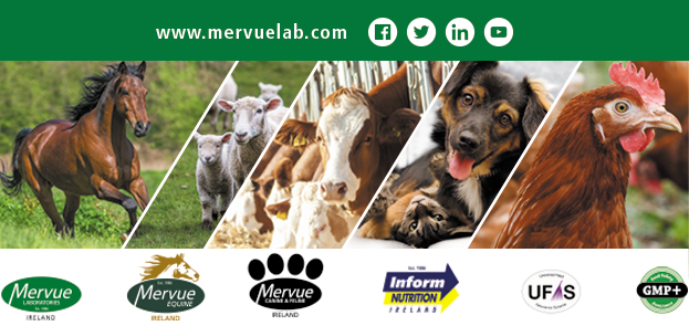 This image has an empty alt attribute; its file name is mervue-animal-logo-1.png